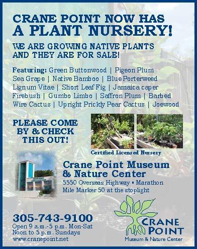Our New Plant Nursery!